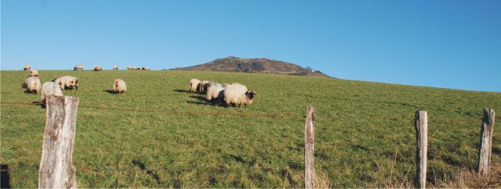 Aux portes de l'arrière-pays basque et de ses jolis villages : Espelette, Ainhoa, Sare…