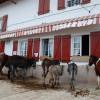 Hélette Foire chevaux pottok (16) ret