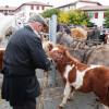 Foire aux chevaux et pottoks à Hélette