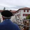 Hélette Foire chevaux pottok (28) ret