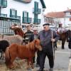 Hélette Foire chevaux pottok (33) ret