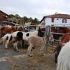 Hélette Foire chevaux pottok (38) ret
