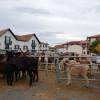 Hélette Foire chevaux pottok (4) ret