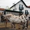 Hélette Foire chevaux pottok (43) ret