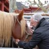 Hélette Foire chevaux pottok (51) ret