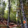 Forêt d'Iraty sentiers randonnée