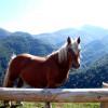 Forêt d'Iraty cheval